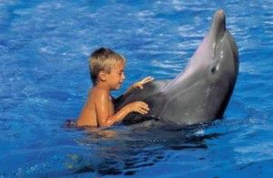 los-delfines-como-terapia
