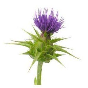 cardo-mariano-semillas-bolsa-100-gr