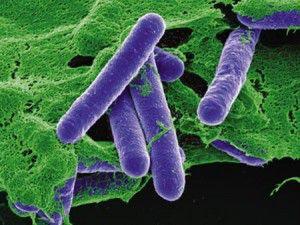 botulismoclostridium-botulinum-bacteriac-corbisstock-photos