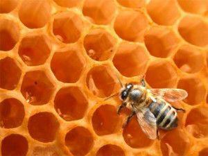 miel-abeja