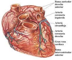 cardiovascenfermedad