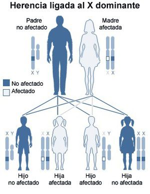clonacion-2