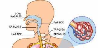 respiratorio4f91