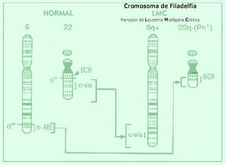 cromosomafiladelfia