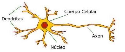 neuronaa