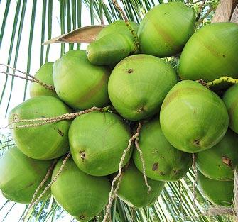 Beneficios-del-agua-de-coco.
