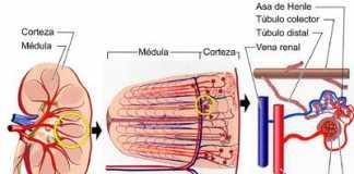 rinon-potasio1