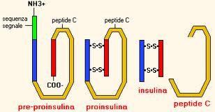 peptido-C