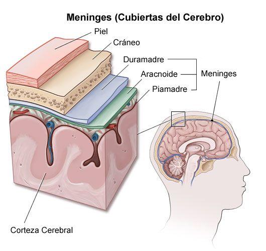 Meningitis-viral