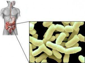 La flora bacteriana buena mantiene al sistema inmunológico en forma