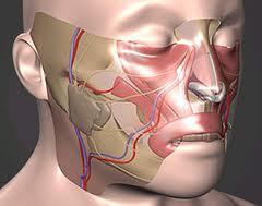 las-desfiguraciones-faciales-no-impiden-la-adaptacion-psicologica