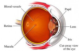 remedios-para-la-prevencion-de-la-degeneracion-macular-2