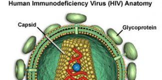 vih-virus