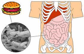 Prevenir-infecciones-de-escherichia-coli