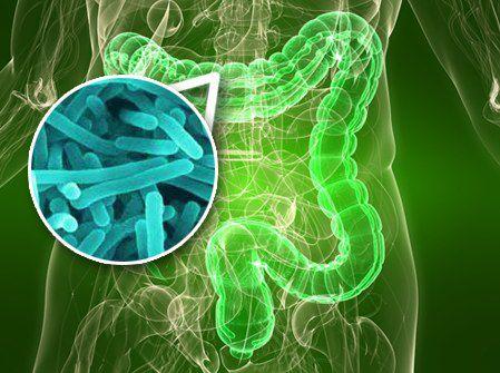 Bacterias-del-tracto-intestinal-podrian-producir-colicos