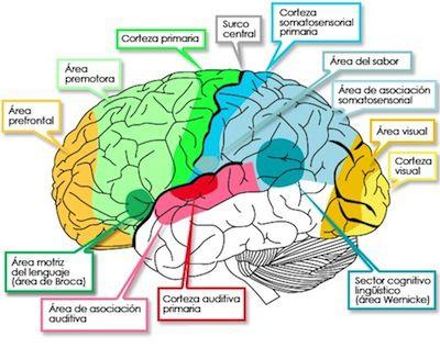 Prevenir-enfermedades-cerebrales-degenerativas