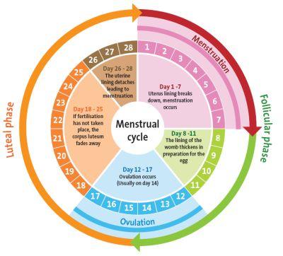 como sales embarazada