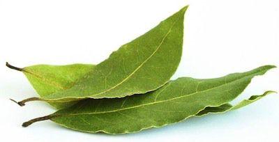 Propiedades medicinales del laurel