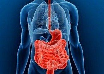 bienestar-digestivo