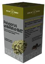 hifas_da_terra_polyporus_62_capsulas
