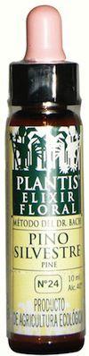 plantis_pine_10ml