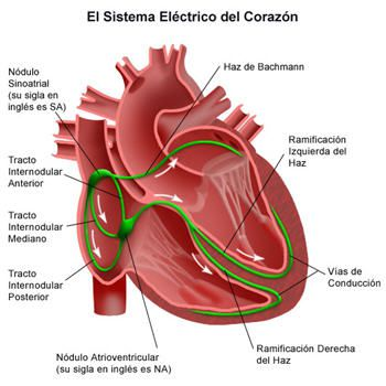 Prevenir-arritmias-cardiacas-con-una-equilibrada-alimentacion