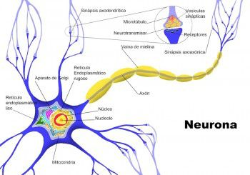 Consejos-para-prevenir-la-degeneracion-de-las-neuronas