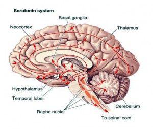 15-serotonina