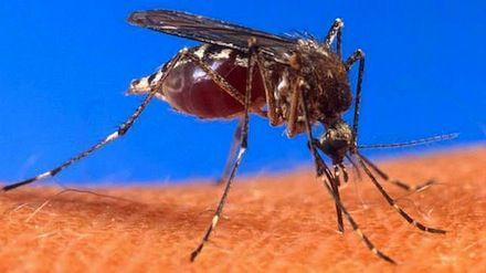prevenirpicadurasmosquitos