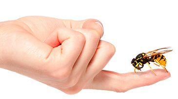 aliviar picaduras de insectos