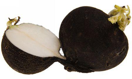 rabano negro