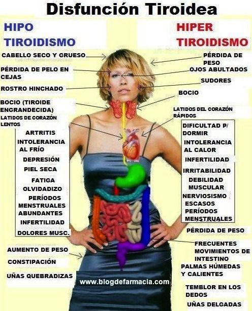 Diferencias entre hipertiroidismo e hipotiroidismo. Puedes leer todos estos artículos sobre la tiroides: http://www.blogdefarmacia.com/?s=hipertiroidismo+hipotiroidismo