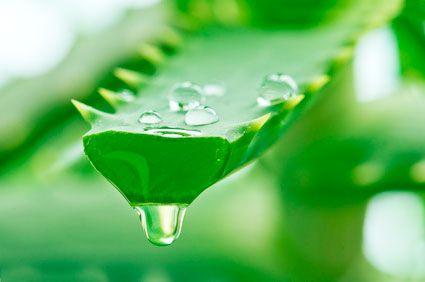 Beneficios para la salud de ingerir el aloe vera