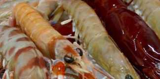marisco-saludable