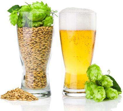 cerveza organica