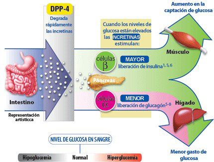 gloicemia