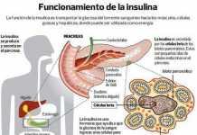 insulina2
