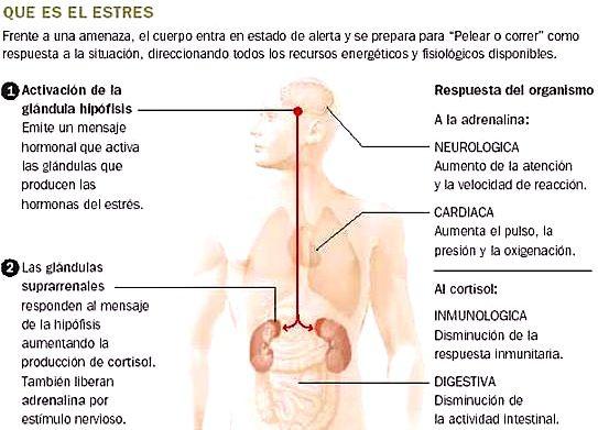 hormonal estres