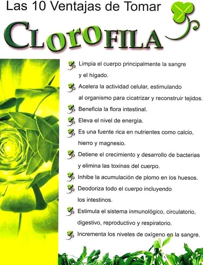clorophyl