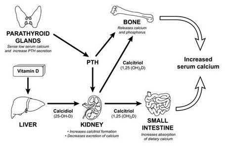 osteomalacia1