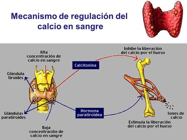 calcio sangre