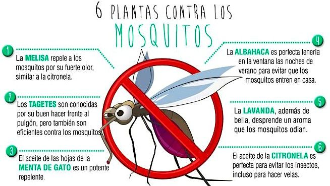 Alimentos que favorecen las picaduras de mosquitos blog - Como ahuyentar a los mosquitos ...