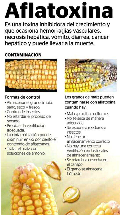 aflatoxinas alimentos
