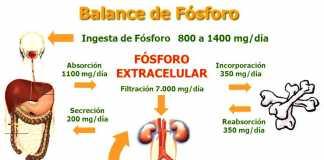 fosoforo-metabolismo