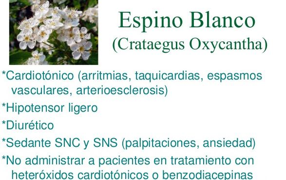 plantas palpitaciones-espino albar