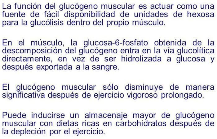 glucogeno1