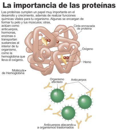 proteinas_aisladas