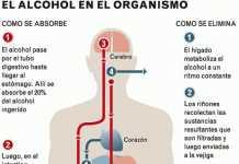 alcohol-organismo