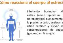 reaccion-estres
