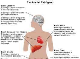 estrogeno